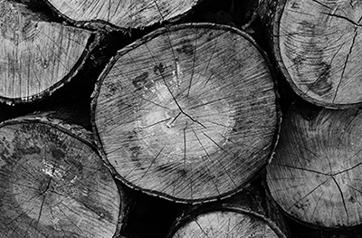drewno_001